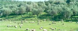 Ενέργειες κτηνοτρόφων για παροχή άδειας σε εγκαταστάσεις τους εντός δασών